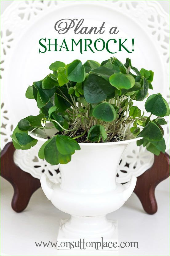 Plant a shamrock! An easy and budget-friendly way to bring a colorful natural element into your decor.