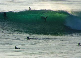 Pacific Coast Shark News