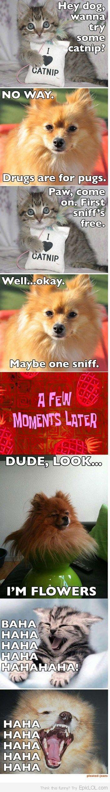 Dude, I'm flowers | made me chuckle!  See More:    http://wdb.es/?utm_campaign=wdb.es&utm_medium=pinterest&utm_source=pinterst-description&utm_content=&utm_term=