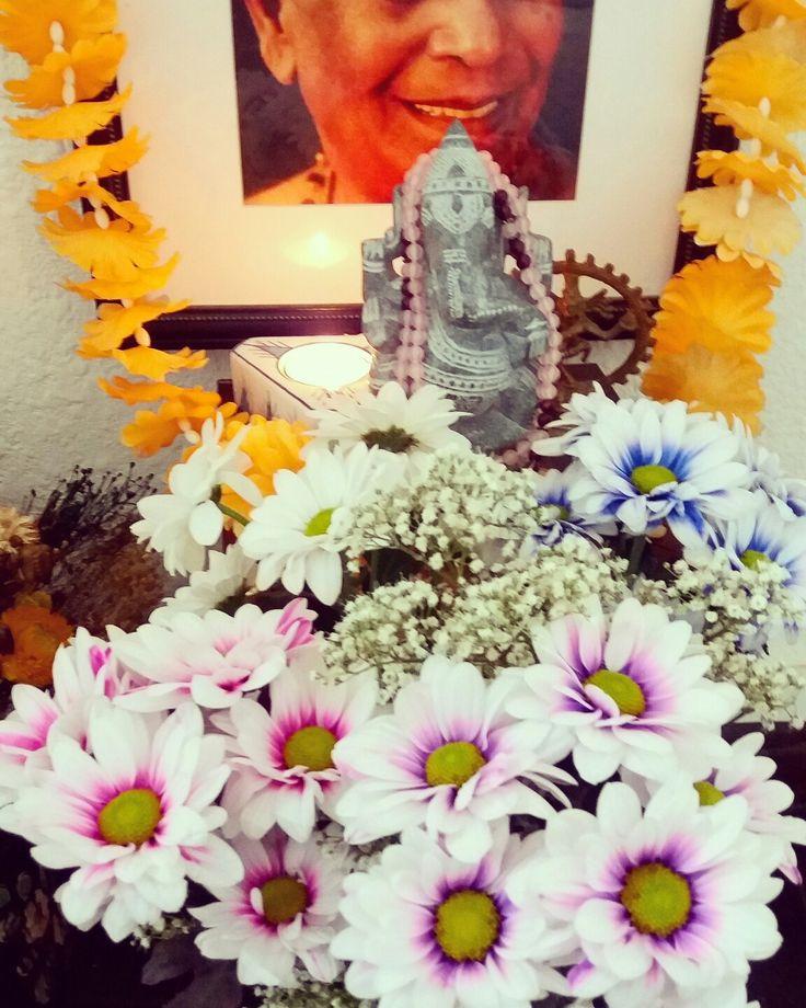 """Margaritas-crisantemos a los pies de Ganesha y Guruji en la cuarta semana de noviembre'16. . """"Me postro a los pies de loto de los maestros que con bondad suprema despiertan en nosotros la felicidad del encuentro con el sí-mismo revelado; que como un chamán de la selva actúan para extraer de nosotros el veneno de la ignorancia que nos encadena a la ilusión del nacimiento y de la muerte."""" Mantra de Ashtanga Yoga."""