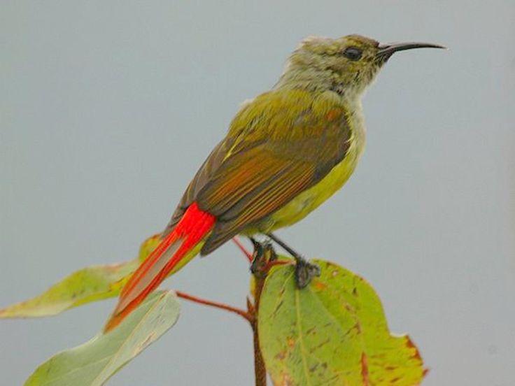 Binog Wildlife Sanctuary - in Uttarakhand, India