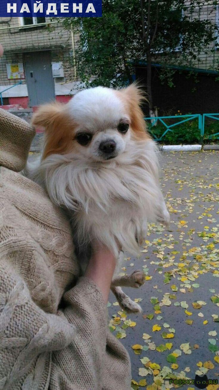 Найдена собака кобель г.Белгород http://poiskzoo.ru/board/read31346.html  POISKZOO.RU/31346 Найден мальчик чихуахуа, есть клеймо. Отдадим хозяевам при предоставлении документов либо фотографий с любимцем!   РЕПОСТ! @POISKZOO2 #POISKZOO.RU #Найдена #собака #Найдена_собака #НайденаСобака #Белгород