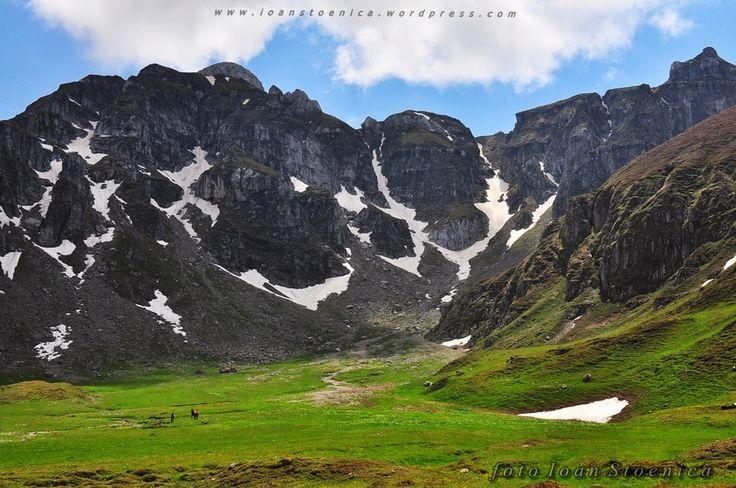 Rododendron și căluți - pe la Țigănești - Ioan Stoenica - Picasa Web Albums