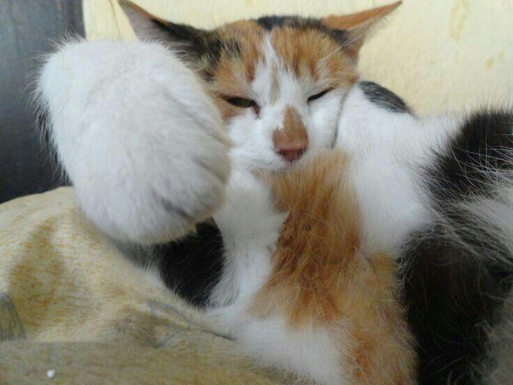 Figyelmeztetés: ha zavarsz, miközben alszom, megbánod!  Köszönettel: Cicóka