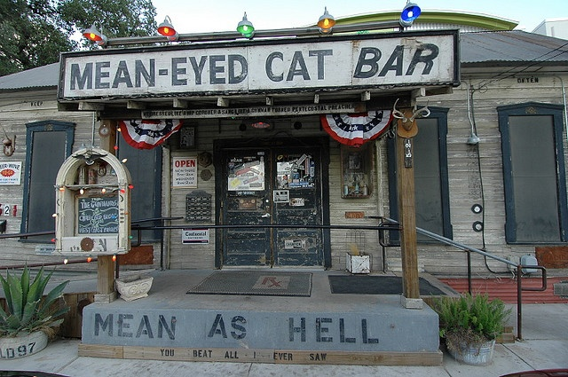 the MEAN-EyED Cat in Austin