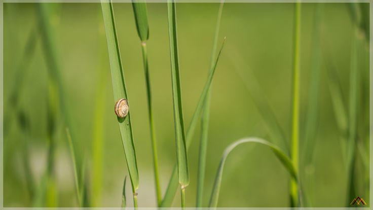 Nap on a Leaf by Ambar Elementals on 500px