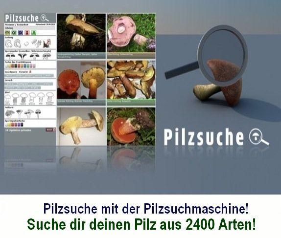 Über 2300 Pilzarten per Bild finden! Die Pilzsuchmaschine aus dem Bayerwald mit über... 20 000 Pilzbildern! Hier kannst du deinem Pilz vergleichen um auf die richtige Pilzbestimmung zu kommen. Viel Erklärungstext zu den Pilzen hilft dir außerdem in der Detail-Information Verwechslungen zu vermeiden.