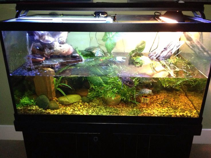 Turtle tank at our client 39 s home here in louisville ky Turtle decorations for home