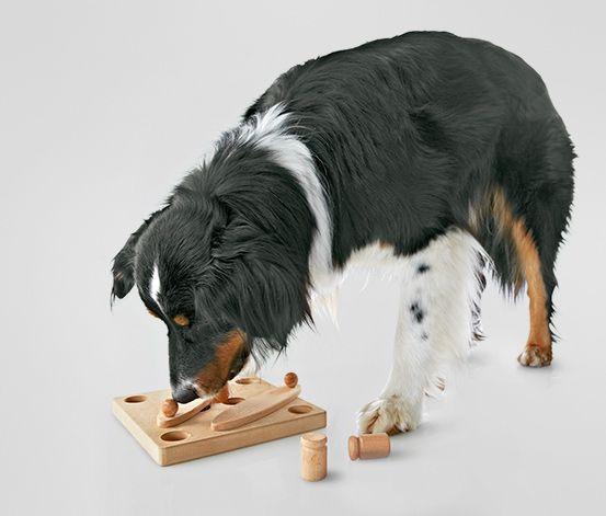 Inteligentna #zabawka dla #psa #tchibo