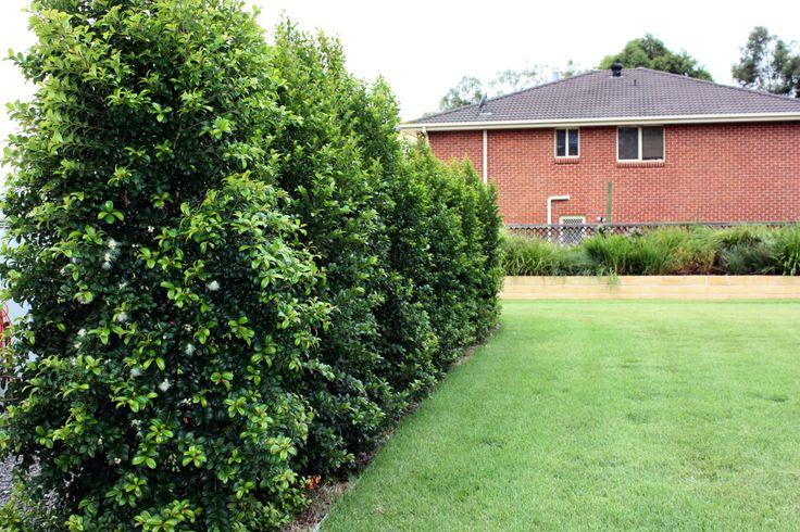 39 best garden