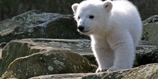 Warum ihr nicht in den #Zoo oder #Tierpark gehen solltet: http://tiersos.de/zoo-tiere-in-gefangenschaft/
