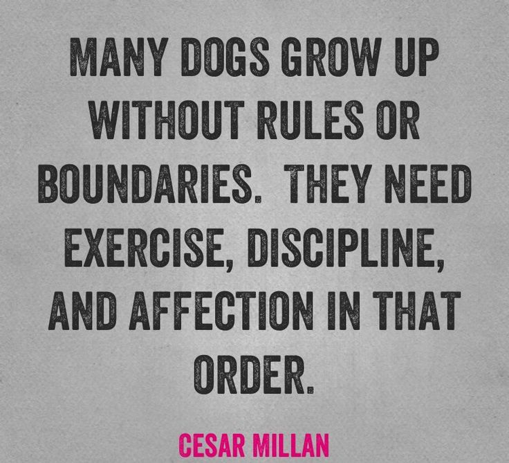 Many dogs grow up without rules or boundaries.  They need exercise, discipline, and affection in that order.  -Cesar Millan