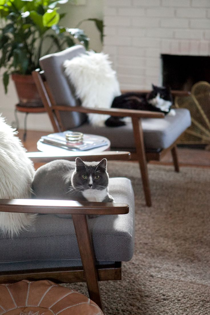 209 Best We Love Pets Images On Pinterest Doggies