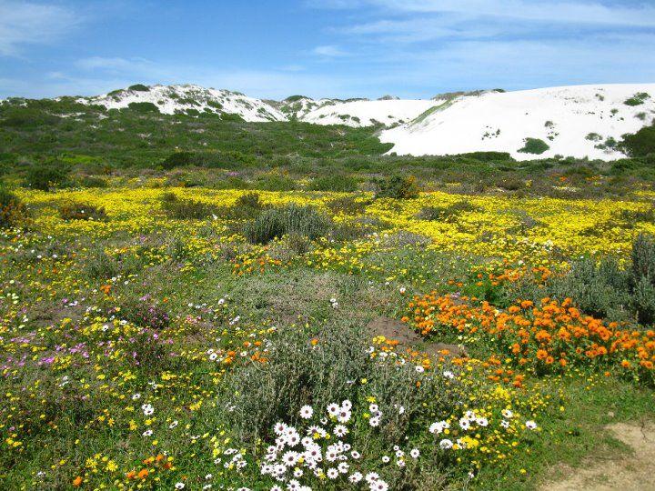 http://www.draaihoek.com/wp-content/uploads/2012/07/spring-flowers-draaihoek-lodge-west-coast.jpg