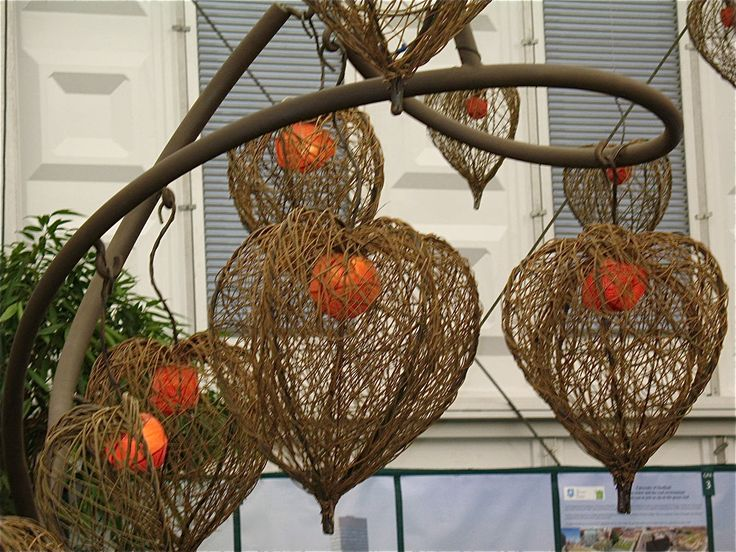 Tom Hare installation: 'The Power of Plants' on exhibit in The Great ...