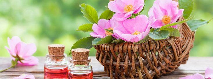 Rosa de mosqueta: propiedades medicinales y usos cosméticos, a un click.