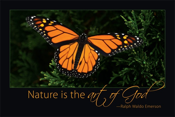 A #MonarchButterfly Illuminates the Forest. #famousquotes #ralphwaldoemerson