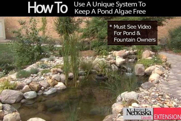 """How To Use A Unique """"System"""" To Keep A Pond Algae Free"""