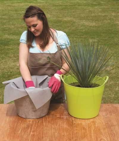 Conseil rempotage d 39 une plante en pot 6 tapes pour - Conseils jardinage pour les plantes en pots ...