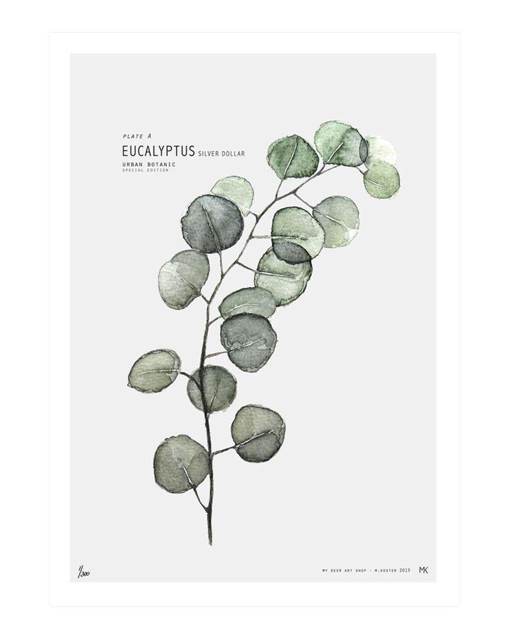 Plate A // Eucalyptus | My Deer Art Shop:
