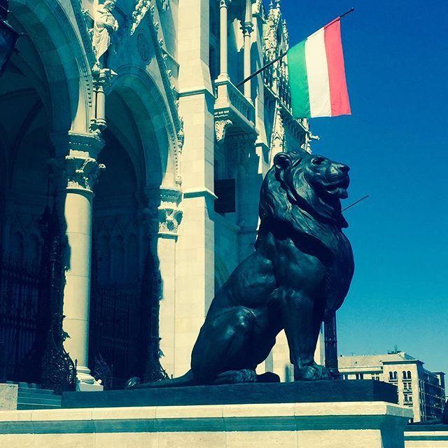 Magnificent lion guards the Hungarian Parliament Building. Hear him roar! #Budapest #Hungary #magyar #roar #lion #statue #glorious #architecture #summer #magnificent #flag #blue #sky #triumphant #interrail #europe #memories #instatravel (scheduled via http://www.tailwindapp.com?utm_source=pinterest&utm_medium=twpin&utm_content=post118343499&utm_campaign=scheduler_attribution)