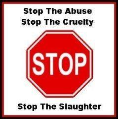 Denemarken: dierenrechten staan boven religie!
