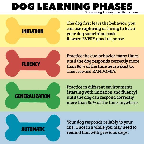 Common Dog Training Mistakes What Makes Them So Training Your