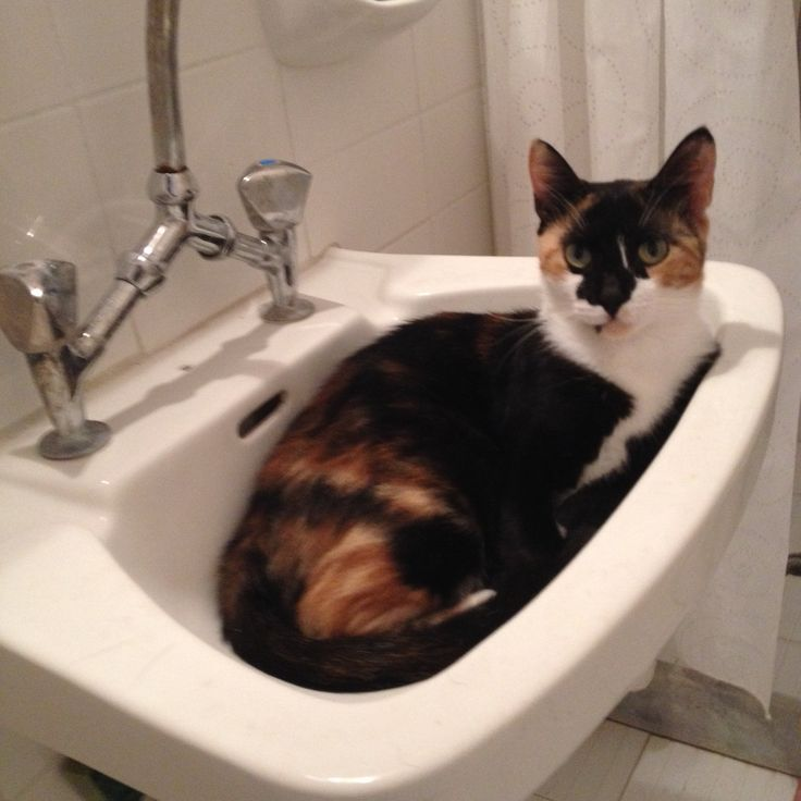 Time for a bath? Don't think so!! #pets #funnycats