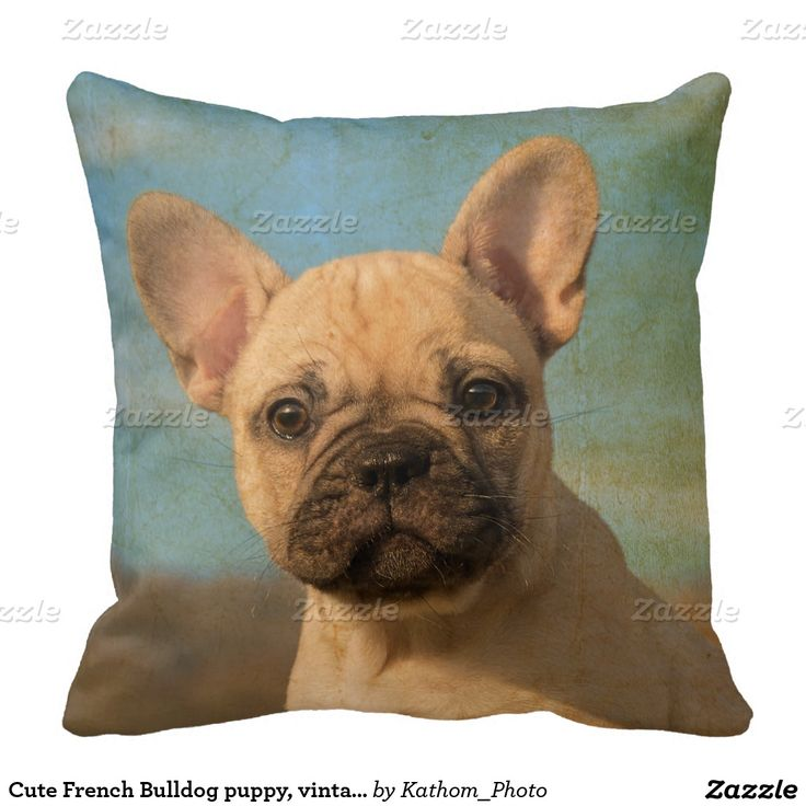 Cute French Bulldog puppy, vintage Pillow