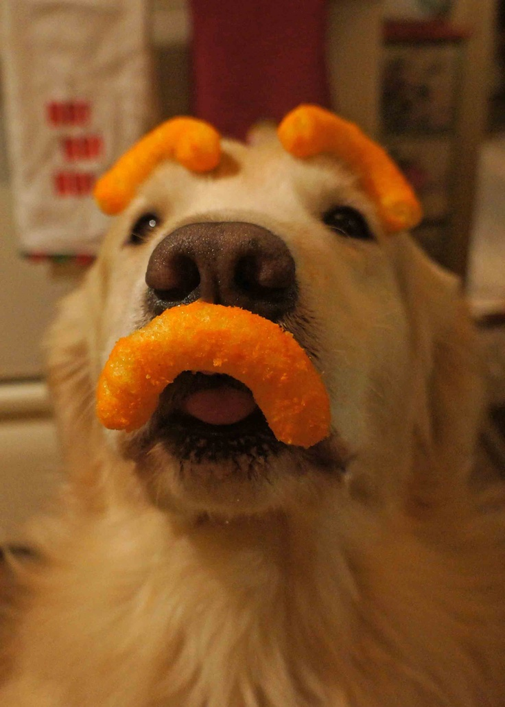 Image result for puppies cheetos