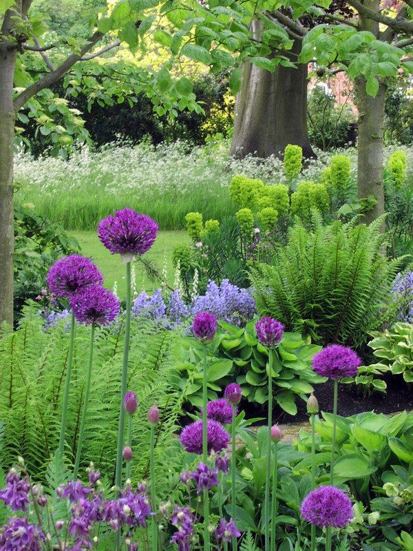 Alliums, euphorbia, hostas,  fern - lovely combination