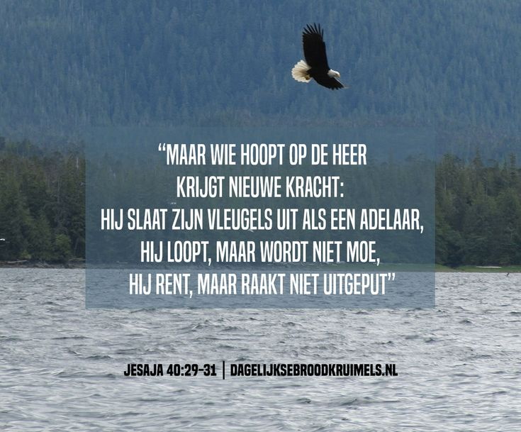 Maar wie hoopt op de Heer krijgt nieuwe kracht; hij slaat zijn vleugels uit als een adelaar, hij loopt, maar wordt niet moe, hij rent, maar raakt niet uitgeput. Jesaja 40:29-31  #Kracht, #Vleugels  http://www.dagelijksebroodkruimels.nl/jesaja-40-29-31/