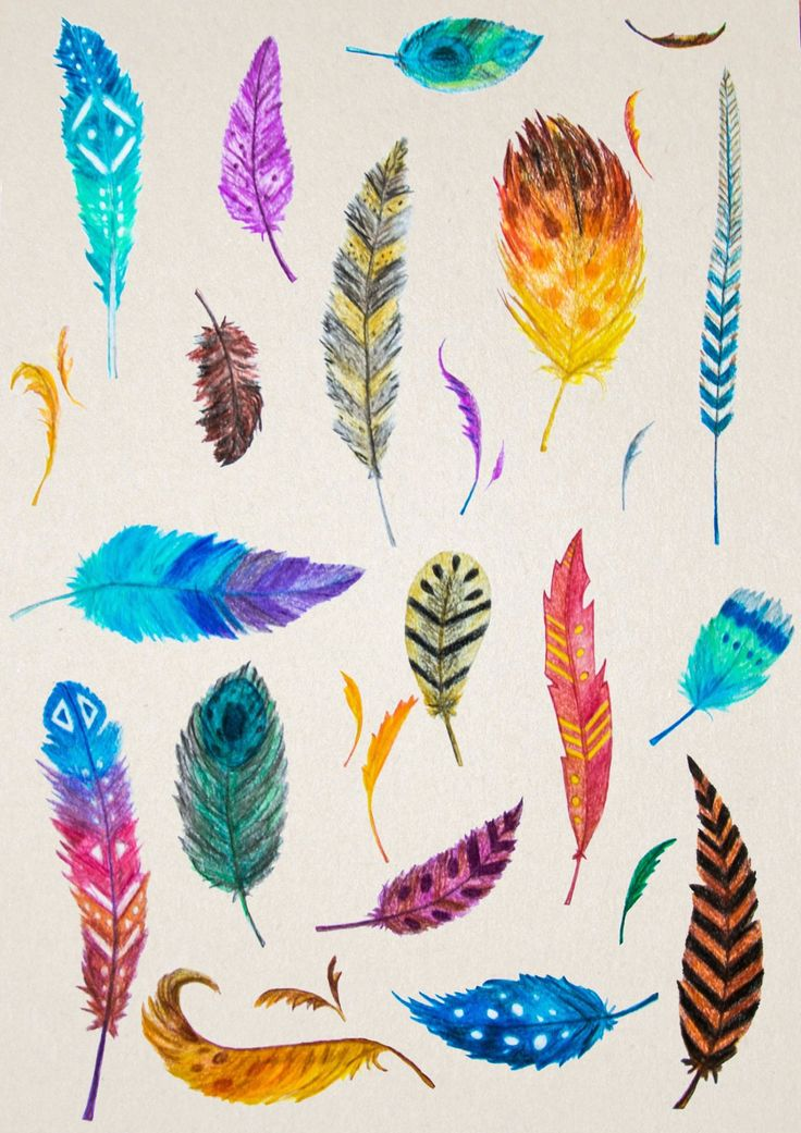 Feathers, color feather illustration