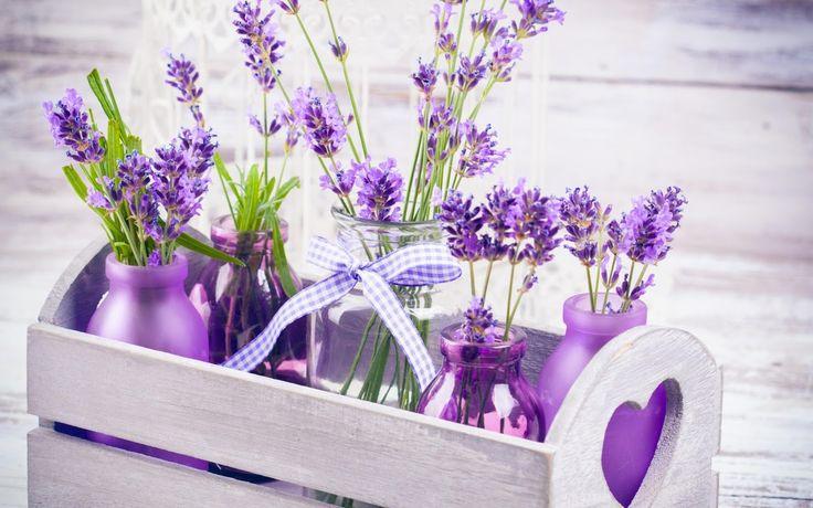 A rossz szagok állandó problémát jelentenek a legtöbb házban. Ha nem bolti vegyszerekkel akarsz illatosítani, vesd be a növényeket! Íme, 5 növény, amely elűzi a szagokat!