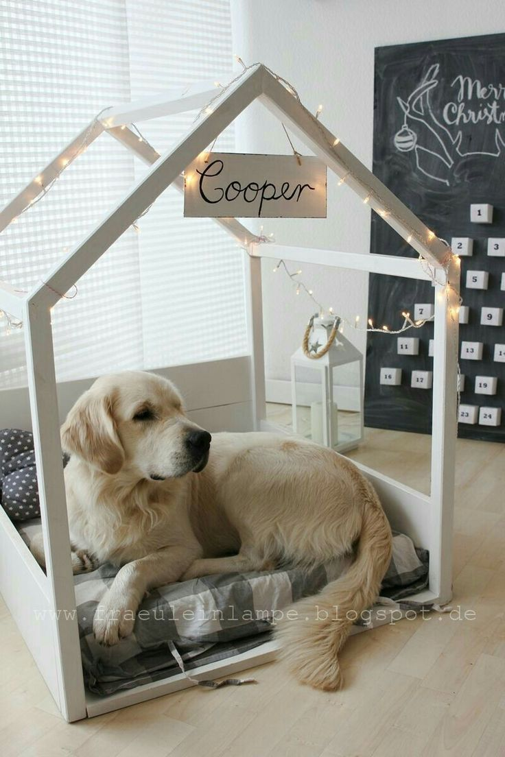 String (fairy) lights atop of ur beloved pet's name, that's framed.. A dog h…