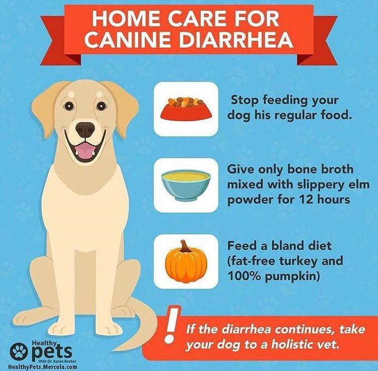 Home remedies for dog diarrhea in 2020 bland diet for