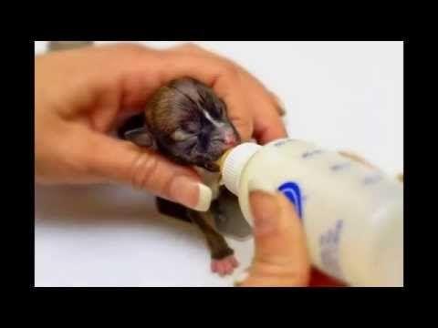 Nejmenší psi ve světě - YouTube