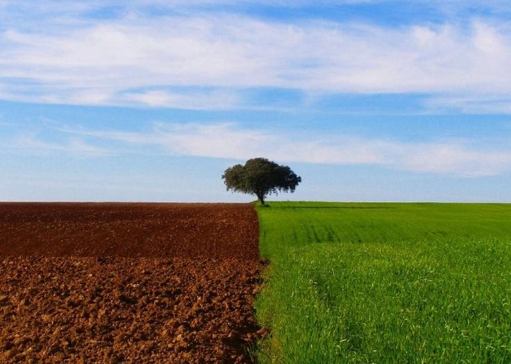 Alentejo #Portugal Fascinating land..