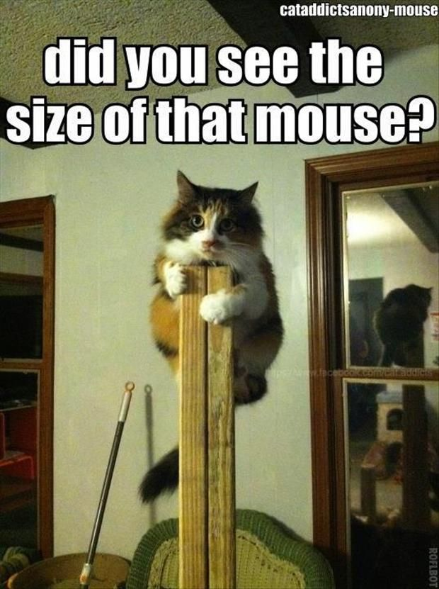 did you see the size of that mouse