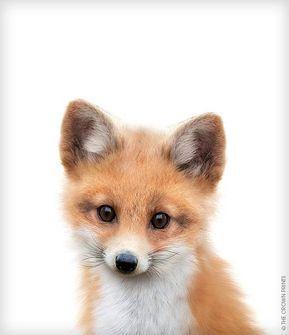Fox print, Fox wall art, Nursery decor, The Crown …