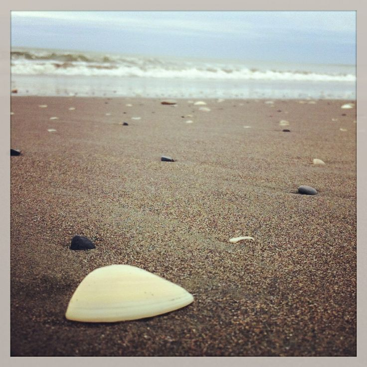 Seashell by the seashore - Amanda Simpson