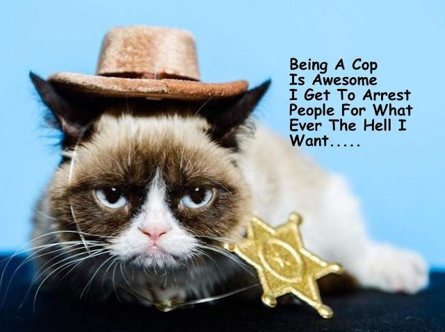 Image result for grumpy cat sheriff