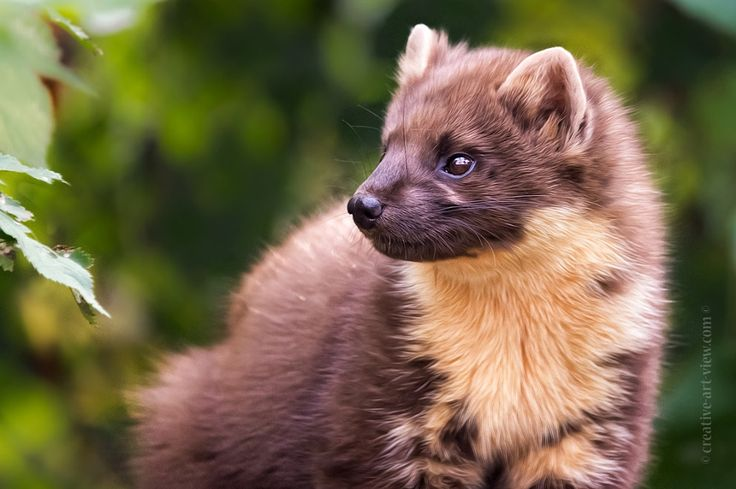 Mr marten by Dalia Fichmann - Photo 140569493 / 500px