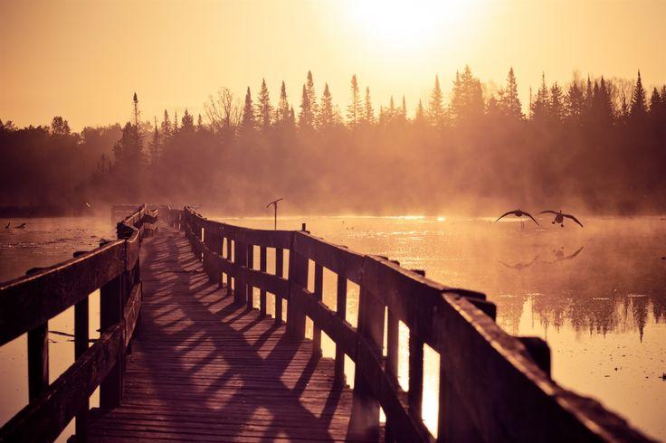 #geese, #walking, #ducks, #steam, #morning, #mist, #river, #nature