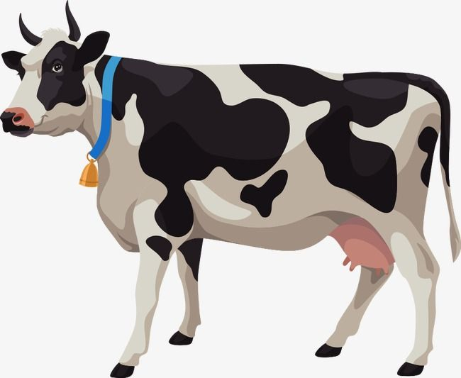 Vector Cartoon Cows Cartoon Clipart Dairy Cow Cattle Png Transparent Clipart Image And Psd File For Free Download Cartoon Cow Cow Clipart Farm Cartoon