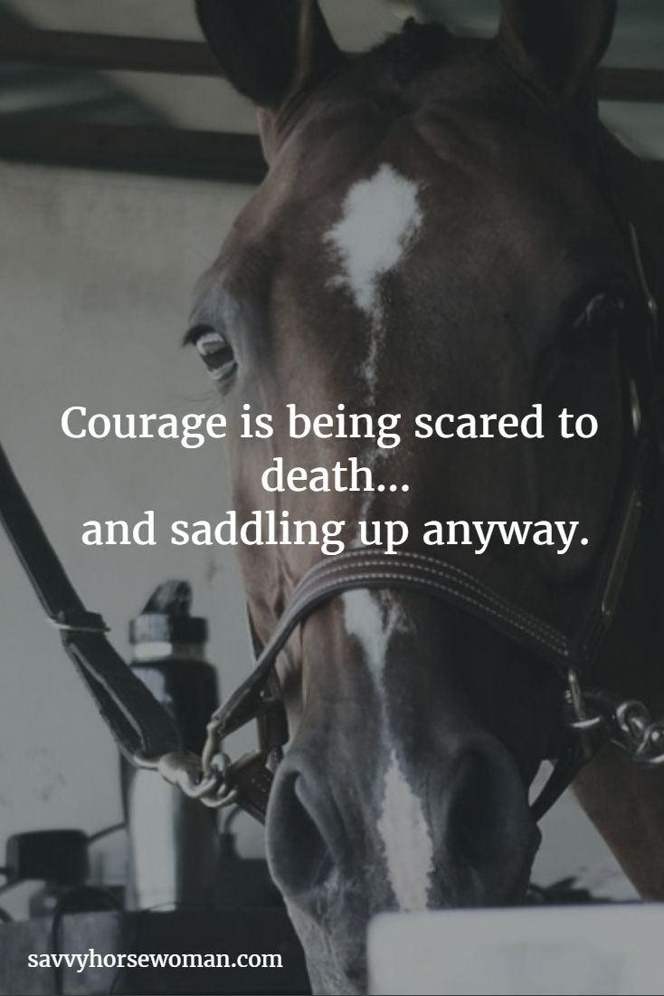 Pics photos quote i wrote for my horse com account s equestrian - Find This Pin And More On Everything Equine