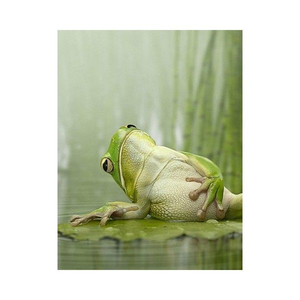 FFFFOUND! | Креативный юмор фотографа Jeffrey Vanhoutte (47 фото) »... ❤ liked on Polyvore featuring animals, backgrounds, pictures, frogs and photos