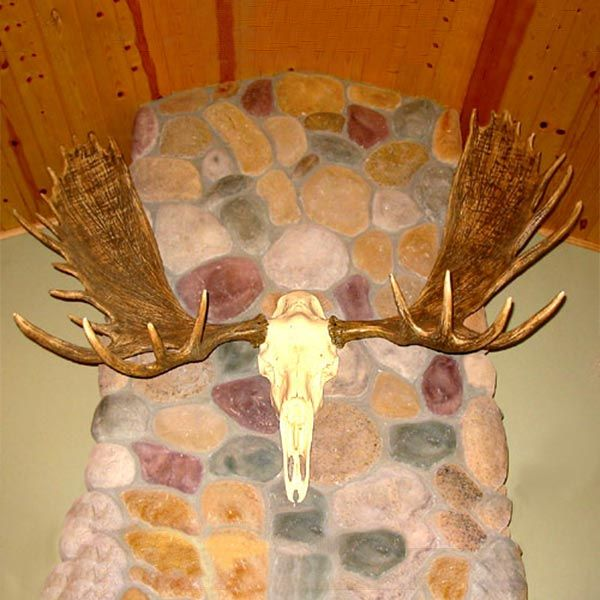 Check out the deal on European Moose Mount at Cabin Place
