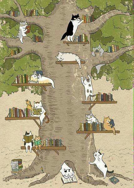 Ms Cat (Cats do love books)