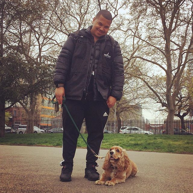 We love taking lesson with @eddie.metrodogtraining  Can't wait for the next class already ☺ 今日はドッグトレーナーのエディとの2回目のレッスン。ブラウニーも、パパママも頑張りました〜。エディありがとう〜  #dogtraining #metrodogtraining #rescuedog #cockerspaniel #cavalier #cockalier #ilovemydog #crazydogmom #mccarrenpark #happydog #dogobedience #bestdogtrainer #ブルックリン #ドッグトレーナー #元保護犬 #里親になろう #ペットショップ反対 #愛犬 #コッカー #キャバリア #アメリカ生活 #犬のいる暮らし
